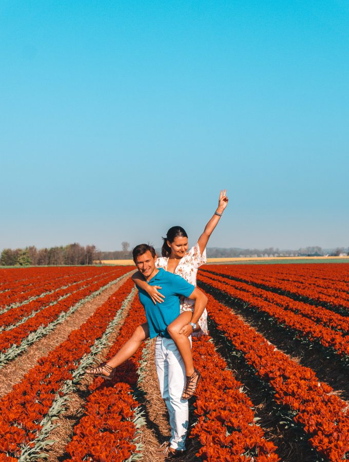 Creative Travel Couple | Tulip Fields in Germany | Tulip Fields Netherlands | Tulpen in Holland | Tulpen in Deutschland | Tulip Fields | Tulpen | Rote Tulpen