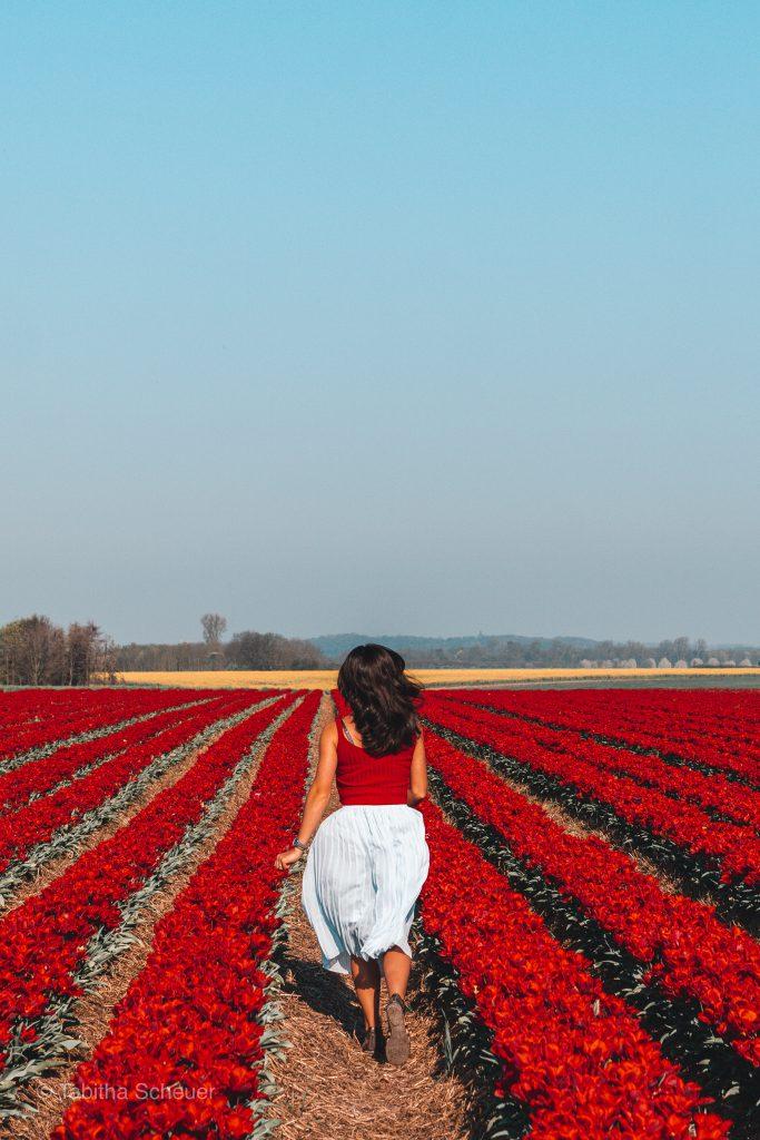 Tulips in Germany |Tulips Netherlands |Lisse | Tulips |Tulpen in Deutschland |Niederlande Tulpen |Tulpen in Holland |Girls who travel
