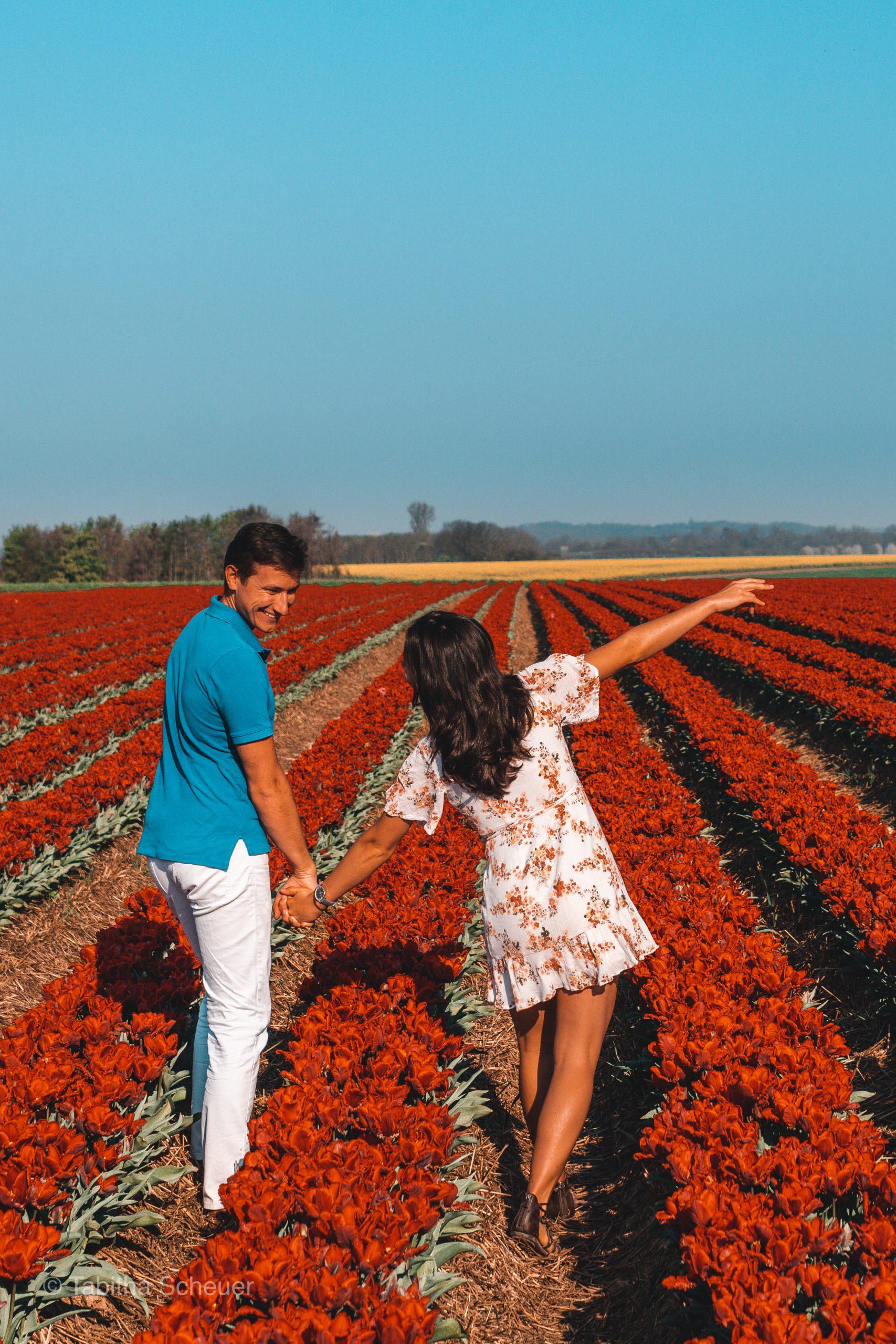 Tulips in Germany |Tulips Netherlands |Lisse | Tulips |Tulpen in Deutschland |Niederlande Tulpen |Tulpen in Holland |Travel Couple |Best Travel Couple