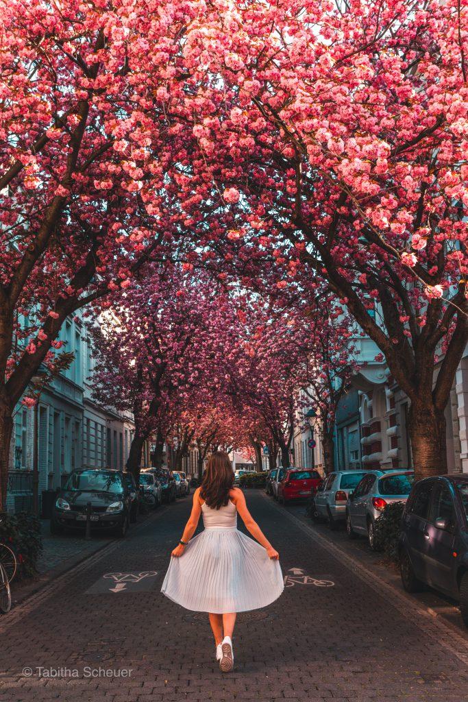 Women who travel |Girl in Bonn |Bonn Kirschblüte |Cherry Blossoms in Bonn |Girl solo travel